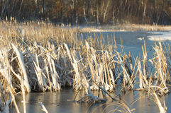 Wetland in the late spring Stock Photography