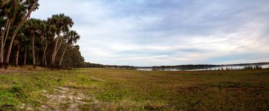 Wetland and marsh at the Myakka River State Park. In Sarasota, Florida, USA Royalty Free Stock Photo
