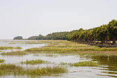 Wetland Marsh by Palm Trees. Wetland marsh by row of palm trees Royalty Free Stock Photos