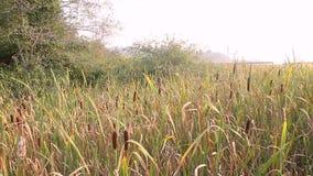 Wetland marsh in western washington along the hood canal. In summer stock video