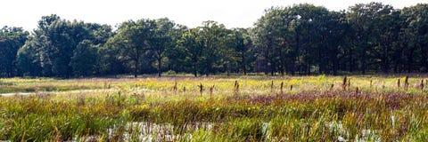 Wetland at Middlefork Savanna, Lake County, Illinois, USA Stock Images