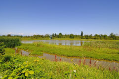 Wetland of a migratory bird sanctuary Royalty Free Stock Image
