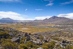 Wetland in Parinacota, Chile Royalty Free Stock Photography
