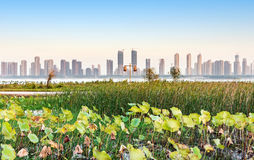 Wetland Park and city views Royalty Free Stock Images
