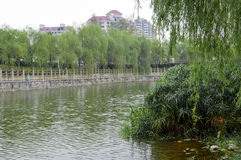 Wetland Park In Modern City Stock Photography