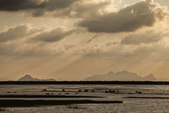 Wetland and lake of Thailand. Fisherman in the lake of Thailand Stock Photography