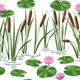Wetland plants background Royalty Free Stock Photo