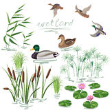Wetland Plants and Ducks Set Royalty Free Stock Photos
