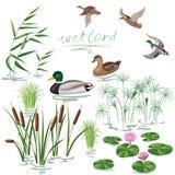 Wetland Plants and Ducks Set Royalty Free Stock Photos