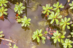 Wetland plants Royalty Free Stock Images