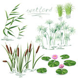 Wetland Plants Set Royalty Free Stock Images