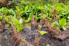 Wetland plants Stock Images