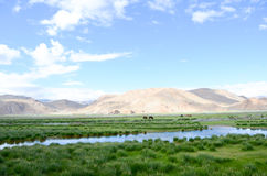 The wetland in the plateau of Tibet Royalty Free Stock Images