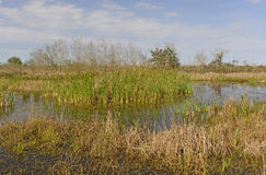 Wetland Pond in the Bayou Royalty Free Stock Photography