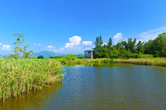Wetland pond at day in Hong Kong Royalty Free Stock Photography