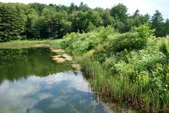 Wetland Pond Edge Stock Photography