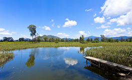 Wetland pond in sunny day Royalty Free Stock Photo