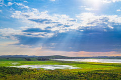 Wetland Royalty Free Stock Image