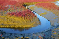 Wetland Royalty Free Stock Photography