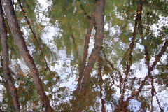 Wetland Reflections royalty free stock photo