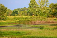Wetland Restoration in Illinois Royalty Free Stock Image