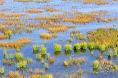 Wetland in Ruoergai automn Royalty Free Stock Photography