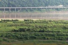 Wetland Stock Photo