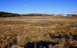 The wetland scenery Stock Photography