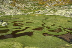 Wetland in Sierra de Gredos Stock Photography