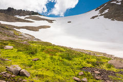 Wetland and snow on a mountain in summer. Mount Rainier, USA royalty free stock photography