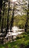 Wetland on a sunny day stock photos