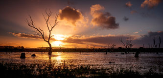 Wetland Sunset Royalty Free Stock Images