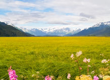 Wetland surrounded by distant snow covered mountains Alaska. Stock Photos