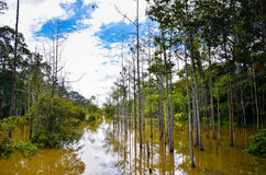 The wetland surrounding the Gateway to Angkor Thom, Angkor Wat Complex, Siem Reap. Cambodia, September 3, 2015 Stock Images
