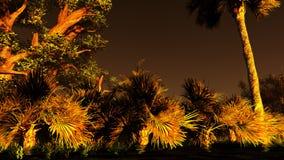 Wetland - swamp Royalty Free Stock Photography