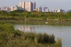 Wetland and swamp Stock Photos