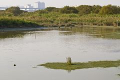 Wetland and swamp Royalty Free Stock Photography
