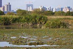 Wetland and swamp Royalty Free Stock Photo
