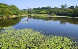 The wetland swamp near city  Stock Photos