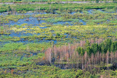 Wetland, swamp, top view. Wetland, swamp, view from helicopter, re-waterlogged land Stock Photography