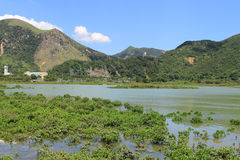 Wetland at Tai O fishing village Royalty Free Stock Photos