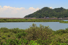 Wetland at Tai O fishing village Stock Images