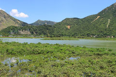 Wetland at Tai O fishing village Royalty Free Stock Photo