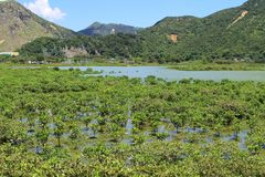 Wetland at Tai O fishing village Stock Image