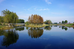 Wetland by the Taihu Lake Royalty Free Stock Image