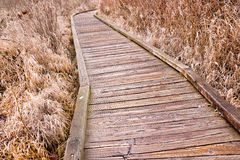 Wetland Walkway Stock Photography