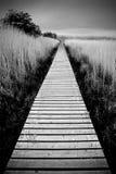 Wetland Walkway - Scotland. A planked walkway reaching deep into the marshland of a wetland wildlife sanctuary in Scotland Royalty Free Stock Photos