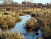 Wetland Water Channel Stock Image