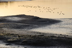 Wetland with water fowl of Back Bay near Newport Beach, CA Stock Image