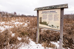 Wetland in winter Royalty Free Stock Images